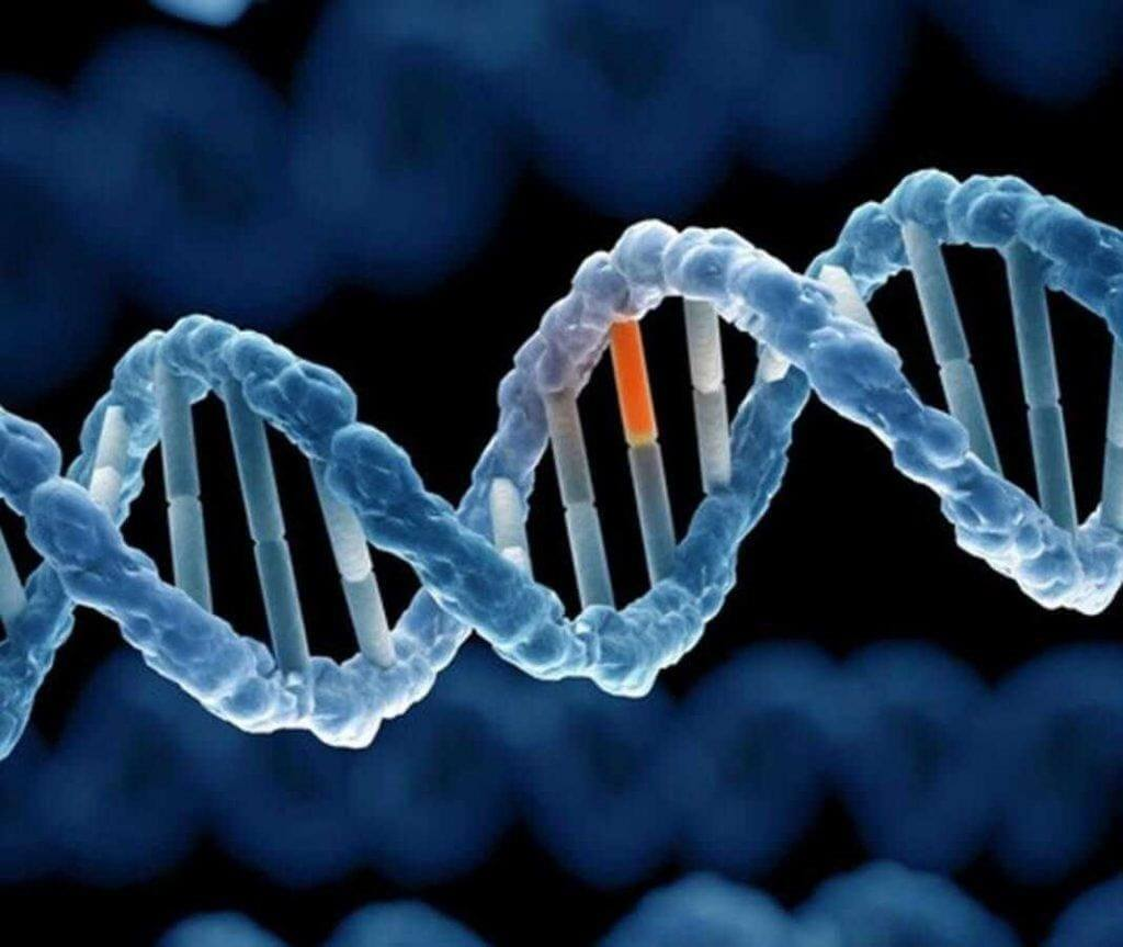 Gen được cho là một trong những nguyên nhân gây bệnh Autism