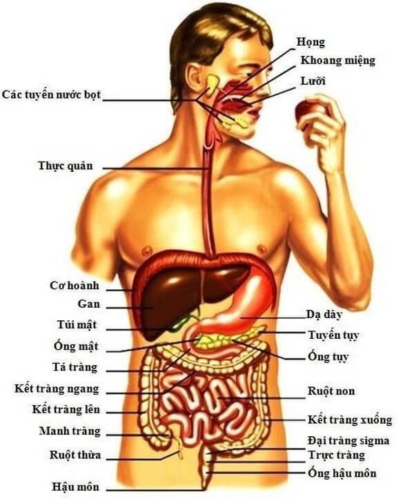 Tất tần tất các bộ phận trên cơ thể người bạn nên biết